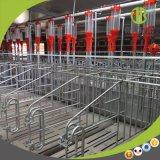 Automatisches Schwein-führendes System mit guter Qualität