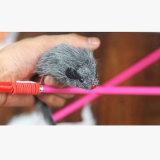 De Verdeler van het nieuwe Product wilde Grappig Catfishing Huisdier Toys7