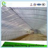 Casa verde plástica galvanizada a quente para a morango do pepino