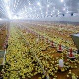 De volledige Vastgestelde Apparatuur Van uitstekende kwaliteit van het Landbouwbedrijf van het Gevogelte voor Kip