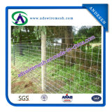 Heiß-Eingetauchter galvanisierter Sport oder Bereich-Zaun-Draht