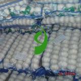 2013 Novo Alho fresco 6p Net
