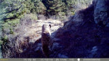 12MP HD 1080P Camera Trap