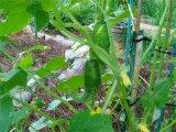 Kletterndes Pflanzenstützineinander greifen/im Garten arbeitendes Netto/Bean u. Erbsen-Filetarbeit