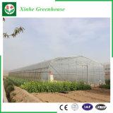 정원 또는 야채 또는 꽃 성장하고 있는을%s 갱도 플레스틱 필름 녹색 집 경작하기
