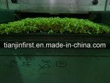 Congelatore fluidificato frutta di verdure delle bacche di alta qualità
