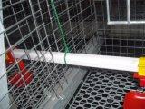 Цыпленок курочки горячего DIP птицефермы гальванизированный арретирует оборудование для сбывания (тип)