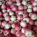 Neues eingesackte Gala Apple des Getreide-2017 Papier