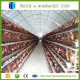 Fornitore della Cina di progetto di costruzione della tettoia dell'azienda avicola di disegno della struttura d'acciaio