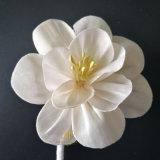Algemeen de Bloem van Sola van de Orchidee voor de Verspreider van het Riet door Met de hand gemaakt