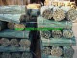 Bastón natural del bambú negro de Moso