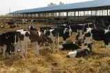 Здание стальной структуры скотоводческого хозяйства