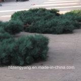 Tour de transmission d'arbre de pin de camouflage