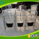 Stalla specifica di figliata del maiale di gestazione del maiale
