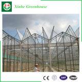 農業のための情報処理機能をもったマルチスパンのポリカーボネートの空の版の温室