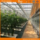 Cucumber Tomatoes를 위한 높은 Cost Performance Glass Greenhouse