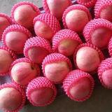 Buena calidad Qinguan fresco Apple de la nueva cosecha