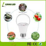En rojo y azul A19 6W Bombilla LED de crecer por crecer Tienda LED de luz de la planta de invernadero