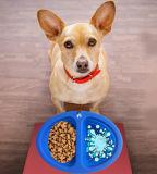 Ciotola pieghevole dell'alimentatore del cane del foro dell'alimento & dell'acqua del nuovo silicone del Amazon doppia
