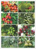 Macchina elettrica verde oliva di raccolto della frutta della mietitrice dell'agitatore della raccoglitrice