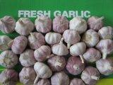 Aglio bianco normale dell'aglio fresco cinese all'ingrosso