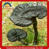 Изготовление обеспечивает верхнее качество Ganoderma Lucidum