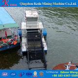Embarcação da coleção do Hyacinth de água para a venda