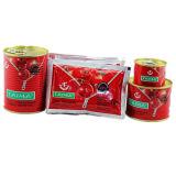 La pâte de tomate pour le Nigéria marché 400g