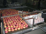 大きいパフォーマンス多機能の泡野菜クリーニング機械