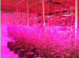 La pianta di serie LED di Samvol Mini-Sun coltiva 30W chiaro