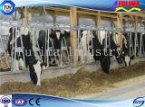 заводская цена крупного рогатого скота Headlock/ограждения/панель управления
