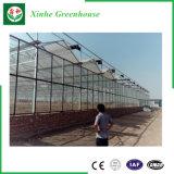 Goedkope Serre van het Type van Serre van Agricultureal van de Spanwijdte van het glas de Multi