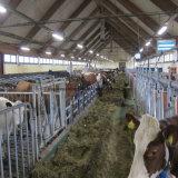Stahlkonstruktion-Vieh verschüttet mit preiswerten Kosten