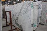 Marmo di marmo bianco italiano di bianco della lastra