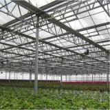 Estufa agricultural da folha do PC da Multi-Extensão feita em China