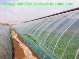 Filme Plástico agrícolas/Melancia Filme Greenhosue/Uvas Filme Estufa /Vegatables Greenhosue Film