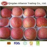 Nueva cosecha FUJI fresco Apple del buen precio