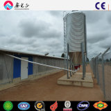 A grelha de aço Pre-Projetada da exploração agrícola de galinha Camada-Verteu (o CH)