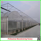 PE Film Cover Materialとの工場Commercial Plastic Greenhouses