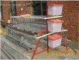 새로운 디자인 건전지 닭 층 감금소 토끼 감금소