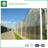 판매를 위한 야채 또는 시딩 또는 과일 또는 꽃에 의하여 이용되는 플라스틱 필름 온실