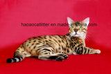 Litera de gato amarilla de Lemnon Deodrant y bacterias (005)