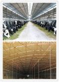 Moderne konzipierte vorfabriziertstahlkonstruktion-Geflügelfarm