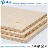 Bintangor/Keruing/ Vietnam enfrentado Chapa de madera de contrachapado comercial