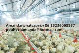 Grill en de Kleine Bevloering die van de Kip Systeem voor het Landbouwbedrijf van het Gevogelte opheffen