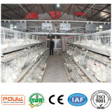 Gabbia del pollo da carne di prezzi & di buona qualità per il coltivatore del pollo (un tipo)