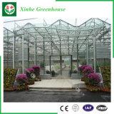 Agricoltura delle serre di vetro per l'ortaggio/fiori