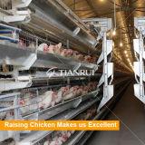 Tianrui complète l'équipement automatique de levage de couche pour la ferme de volailles de Philippines
