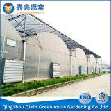 Estufa de China para a estufa da película da estufa da agricultura dos verdes