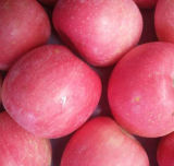 Grade A125-150 Fresh Red FUJI Apple